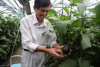 丸々と育った折戸なすを収穫する柴田明生さん=静岡市清水区で