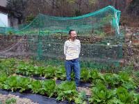 家の中には入らず、一目見て引っ越しを決めた段々畑には冬野菜が育つ=兵庫県三田市乙原で、松井宏員撮影