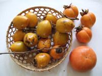 かつて串柿に使われていた「あおそ」。ザルの外は四ツ溝柿(右上3個)と富有(ふゆう)柿