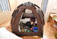 がん治療などで免疫力が低下した子どもたちのため屋内に設置されたテント=大阪市鶴見区で2017年11月4日、猪飼健史撮影