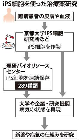 ips細胞を使った治療薬研究