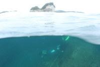 円月島(中央上)の南側の海底にラインを張って、サンゴの増減調査をするダイバーたち=和歌山県白浜町沖で、山本芳博撮影