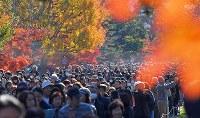 1年半ぶりの一般公開で、紅葉が見ごろとなった乾通りを歩く大勢の人たち=皇居で2017年12月2日午前9時54分、手塚耕一郎撮影