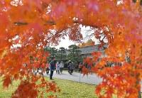 紅葉が見ごろを迎える中、1年半ぶりに一般公開された皇居の乾通り=東京都千代田区で2017年12月2日午前10時43分、手塚耕一郎撮影