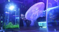 熱帯魚が入った水槽に見入る女性=大阪市北区で2017年11月22日、山崎一輝撮影