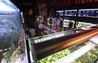 17本の水槽が並ぶ店内=大阪市北区で2017年11月22日、山崎一輝撮影