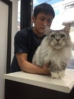 健康診断で猫を診察する服部幸院長=東京都江東区の東京猫医療センターで