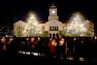 関西学院大の時計台前・中央広場にあるヒマラヤ杉。クリスマスツリー用のライトが点灯された=兵庫県西宮市上ケ原一番町1で、高尾具成撮影