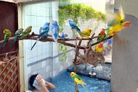 銭湯のガラス張りの中庭を飛び回るインコをセルフタイマーで撮影した=京都市上京区の松葉湯で、小松雄介撮影