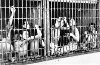 収容された「浮浪児」。脱走を防ぐため半身裸にされることがあった=東京・台場で1946年7月ごろ