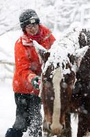 雪の降りしきる中、馬の世話をする千葉友幸さん(25)。祖父が馬搬をしている写真を見たことをきっかけに、森林資源の有効活用に取り組む地元のNPO法人に就職。研修などを通じて岩間さんから馬搬を学び、「もっと技術を磨きたい」と次世代の担い手として期待されている宮城県大崎市で2017年12月12日、喜屋武真之介撮影