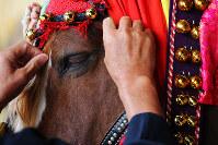 チャグチャグ馬コに参列するため、鈴の付いた色鮮やかな装束をまとう馬=岩手県滝沢市で2017年6月10日、喜屋武真之介撮影