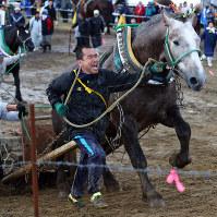 青森県で開かれた「馬力大会」で引き手と呼吸を合わせ、おもりを乗せたそりを引いて斜面を駆け上がる馬=六ケ所村で2017年11月5日、喜屋武真之介撮影