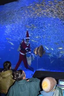 サンタクロース姿で餌付けするダイバー=美浜町の南知多ビーチランドで
