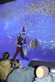 サンタクロース姿で餌付けするダイバー=愛知県美浜町の南知多ビーチランドで2017年12月14日、林幹洋撮影
