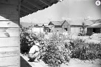 被爆から1年の広島・京橋付近の住宅の家庭菜園。深刻な食糧難の中、一坪菜園をする家庭が多く見られた。画面中央に「Hiroshima Bazaar Bargain Sale」という看板(京橋通りではないかと思われる)=広島市京橋町(現広島市南区)で1946年7月24日ごろ