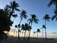 Palm trees sway in the breeze on a beach in Honolulu's resort district early in the morning of Nov. 16, 2017. (Mainichi)