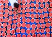 検査のために割られた試作スイカ。空洞の有無や糖度のほか、試食によって食感なども調べる=奈良県田原本町で2017年6月5日、山崎一輝撮影