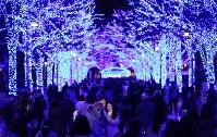 青色LEDでライトアップされたケヤキ並木=東京都渋谷区の代々木公園で2017年11月24日午後6時28分、後藤由耶撮影