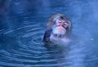 気持ちよさそうに温泉に入るニホンザル=北海道函館市で2017年12月5日、梅村直承撮影
