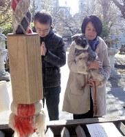愛犬を連れた参拝客が絶えない境内=東京都新宿区の市谷亀岡八幡宮で