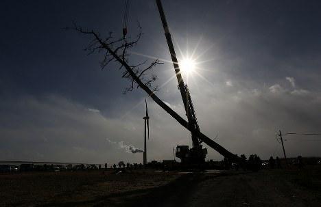 切り倒された「かしまの一本松」=福島県南相馬市で2017年12月27日午前11時55分、小出洋平撮影