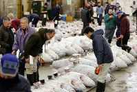 People exchange greetings next to frozen tuna ahead of the first auction of the year at Tsukiji fish market in Tokyo's Chuo Ward, on Jan. 5, 2018. (Mainichi)