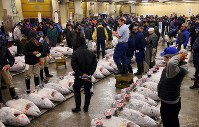 Numerous people are seen next to frozen tuna at the first auction of the year at Tsukiji fish market in Tokyo's Chuo Ward, on Jan. 5, 2018. (Mainichi)