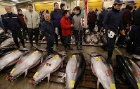 People are seen next to fresh tuna during the first auction of the year at Tsukiji fish market in Tokyo's Chuo Ward, on Jan. 5, 2018. (Mainichi)