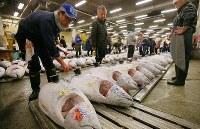 築地市場の冷凍マグロ卸売場で、初競りを前にマグロを見て回る市場関係者ら=東京都中央区で2018年1月5日午前5時34分、小川昌宏撮影