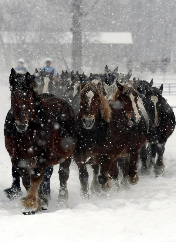 「馬追い運動」始まる 妊娠馬も駆ける