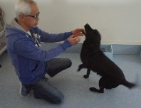 A trainer tries to raise the spirits of a dog prior to sniffing urine samples to check for cancer, on Dec. 12, 2017. (Mainichi)