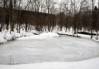 結氷したアファンの森にある弥生池=長野県信濃町で、C・W・ニコル・アファンの森財団提供