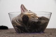 写真集「ネコの裏側」より(C)Rumiko Yoshizawa
