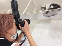 写真集「ネコの裏側」の撮影風景=辰巳出版提供