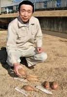 """「この甘藷が国民をひもじさから救った」と話す蔵之内さん。手にしたイモと手前左が「護国イモ」。手前右は""""母""""となった「元気」、奥は""""父""""の「七福」。貯蔵庫の温度は平均13度。湿度は90~92%に保たれている=茨城県つくばみらい市の畑作物研究所谷和原畑圃場で"""