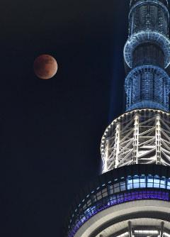 皆既月食で赤銅色に染まる満月。右は東京スカイツリー=東京都墨田区で2018年1月31日午後10時13分、藤井達也撮影