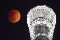 皆既月食で赤銅色に染まる満月。右は東京スカイツリー=東京都墨田区で2018年1月31日午後10時20分、藤井達也撮影