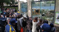 ジャイアントパンダのシャンシャンを見る大勢の入園者=東京都台東区の上野動物園で2018年2月1日午前10時17分、長谷川直亮撮影