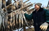 特産品の干しダラ作りをする朴さん=韓国・平昌で2018年1月28日、佐々木順一撮影