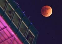 皆既月食となり赤銅色になった月。手前はさっぽろテレビ塔=札幌市中央区で2018年1月31日午後10時13分、竹内幹撮影