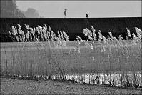 太古の草のそよぎが聞こえる=熊本県芦北町で、田鍋公也撮影