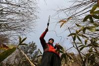 東京農工大の奥田圭・産学官連携研究員(32)は住民避難が続く沿岸部自治体で増えるイノシシなどに全地球測位システム(GPS)を取り付けるなど、野生動物の生態を調べる=福島県川内村で2018年1月16日、小出洋平撮影