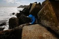 東京電力福島第1原発から南に約1・2㌔の海岸で、国立環境研究所の堀口敏宏博士(53)は波消しブロックのすきまにもぐり込み、イボニシを採取する。干潮に合わせるため、時間は限られている=福島県大熊町で2018年2月20日、小出洋平撮影