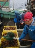 今季も記録的な不漁となった道南のスルメイカ漁=函館市の函館漁港で