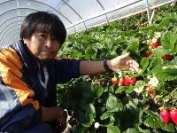 イチゴの魅力を「華やかで誰でも食べて笑顔にできる」と話す萩原一亮さん=静岡市清水区で