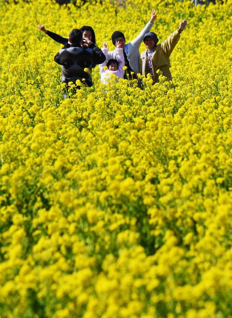 Photo Journal: Sea of yellow