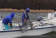 Fishermen gather freshwater clams following the end of a fishing ban at Lake Ogawara, in Tohoku, Aomori Prefecture, on March 22, 2018. (Mainichi)