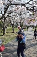 福岡城内でサクラの花見を楽しむ家族連れ=福岡市中央区の福岡城跡で2018年3月24日、青木絵美撮影