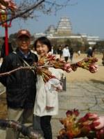 桜の花を楽しむ観光客ら=姫路市本町の姫路城で2018年3月25日、田畑知之撮影